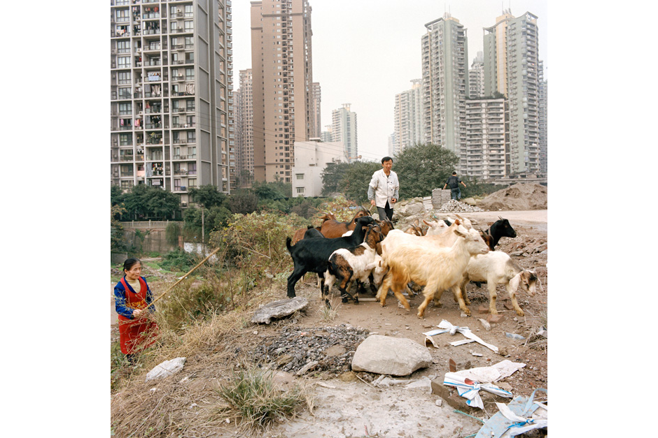 A couple pastures goats in between a housing complex and a construction site in the Shapingba district. Tax benefits and other incentives offered by the local government have spurred areas of economic growth in the city's central business district as what was once open space is converted to construction sites for new developments.