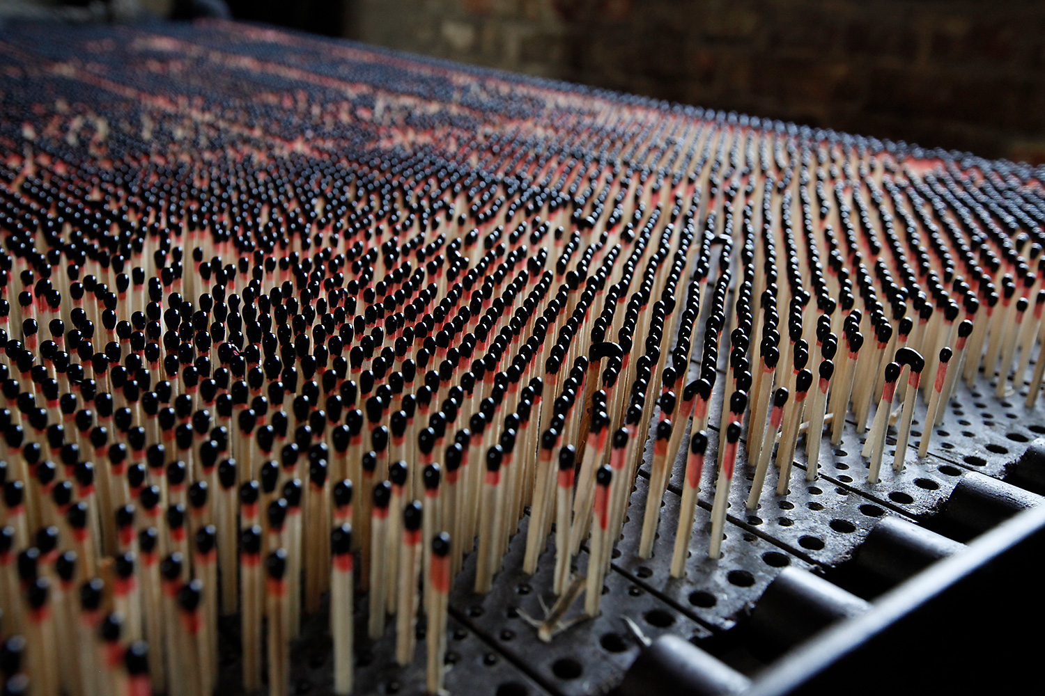 Thousands of matchsticks stand in a machine used to dip them. The quality of the dipping determines the quality of the match.