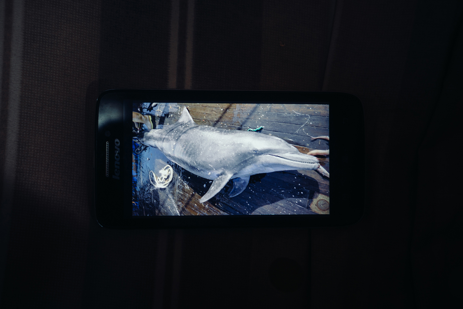 A worker on Wang's ship displays a picture of a spinner dolphin (Stenella Longirostris, already dead in the photo) on his cellphone, July 25, 2016. The dolphins get caught in the trawl nets used by industrial fishing boats, which catch indiscriminately.