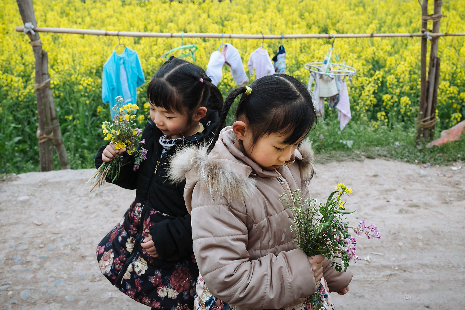Sisters Mengmeng, four, and Siyao, six, pick wildflower bouquets beside a blooming rapeseed field in their hometown, Longjing village, Jintang county, Sichuan province, in March 2015. Four months earlier, after years of working in the coal mines, their father, Li Mingjin, was diagnosed with cancer.