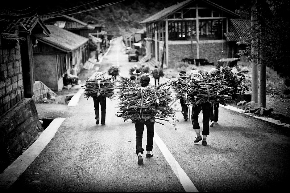 Mosuo girls carry firewood to their home in Nisai village. Mosuo girls perform many tasks that men say they cannot do, including carrying 40-50 katis of firewood. Nisai, Lugu Lake, Yunnan, China.