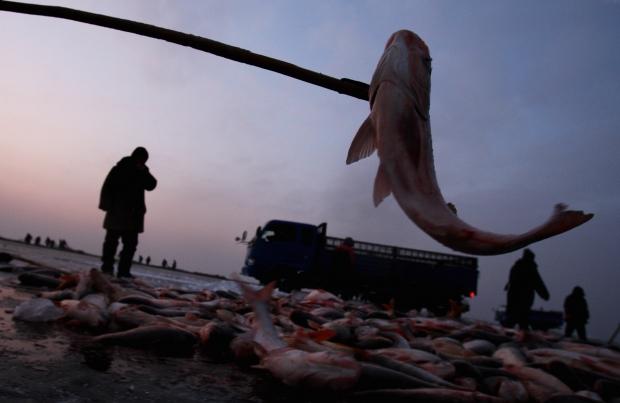 Overfishing Pushes 80% of Chinese Fishermen Towards Bankruptcy