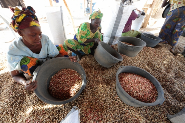Women sorting peanuts in central Senegalese village