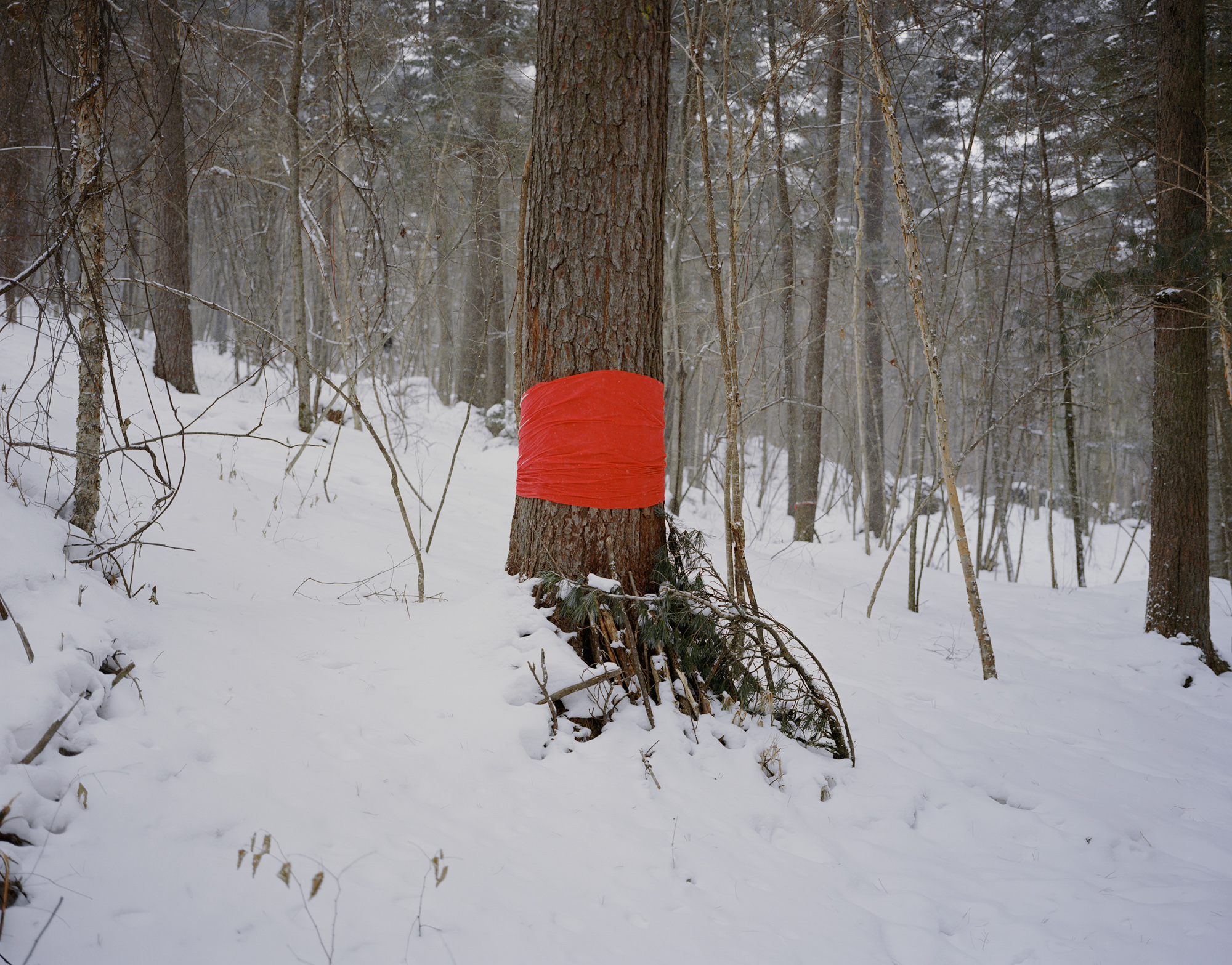 "A piece of red cloth tied around a pine tree, a local tradition of praying for peace and fortune, at Wuying National Forest Park, in the city of Yichun, in China's northeastern Heilongjiang province, February 2017. Yichun is best known as China's ""forest capital."" In 2013, it was deemed ""declining."""