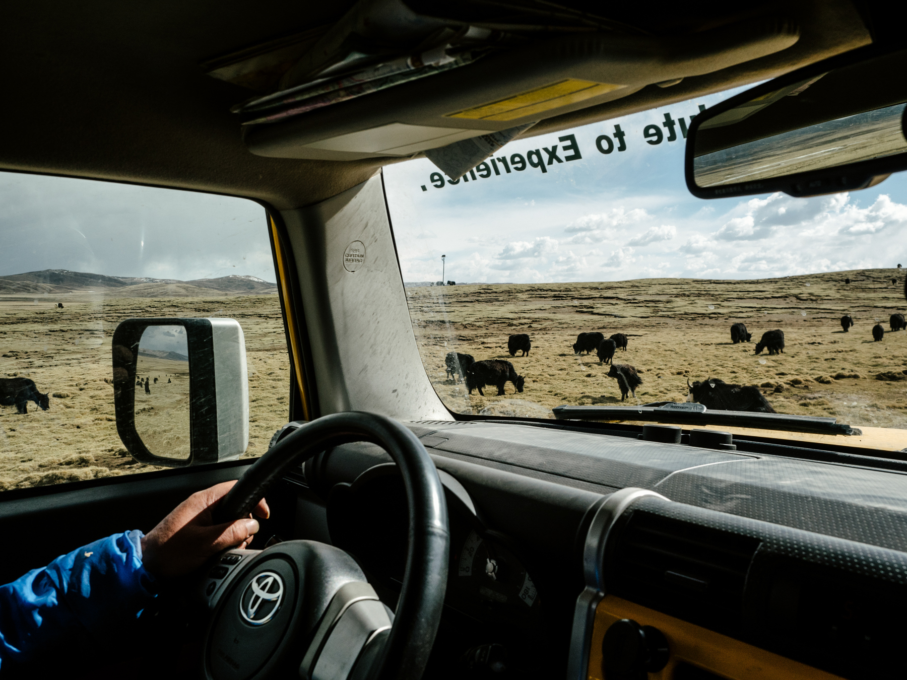 Yang drives past grazing yaks in the Sanjiangyuan National Nature Reserve in Qinghai province. In an effort to address a record dry spell in the Yellow River in the 1990s, as well as other environmental issues, the government established the Sanjiangyuan Reserve to protect the river's source in northwest Qinghai province.