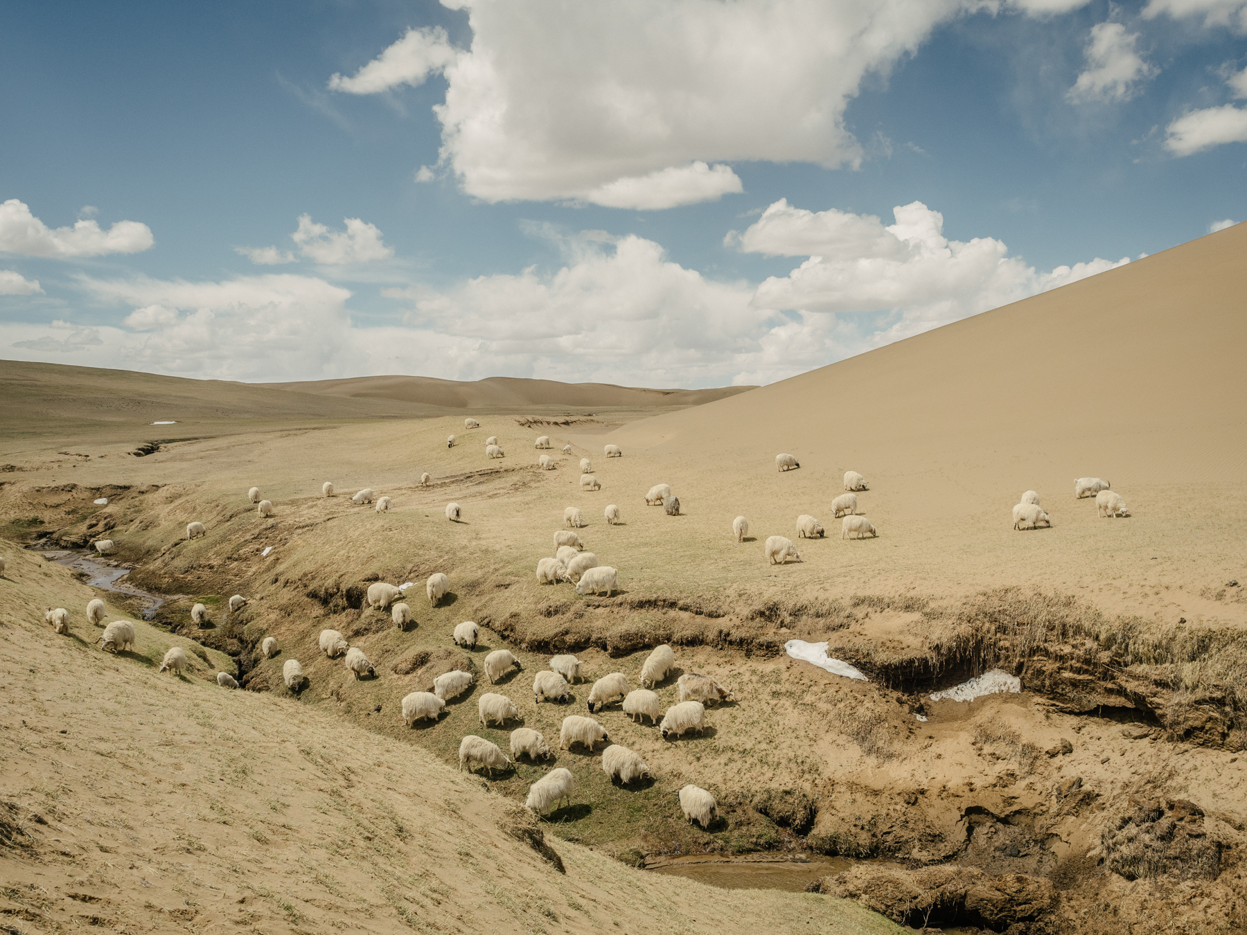 Sheep at the edge of a receding grassland. Experts are divided over whether overgrazing in this fragile region is one of the major causes of desertification.