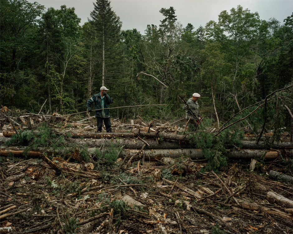A team of lumbermen works in the Lazo region. Six laborers make up a team and live on-site for stretches of three months.